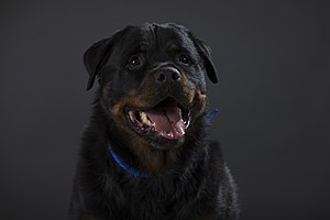 Portraits Of The Battersea Dogs Left Behind This Christmas