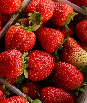Palestinian Farmers Harvest Strawberries